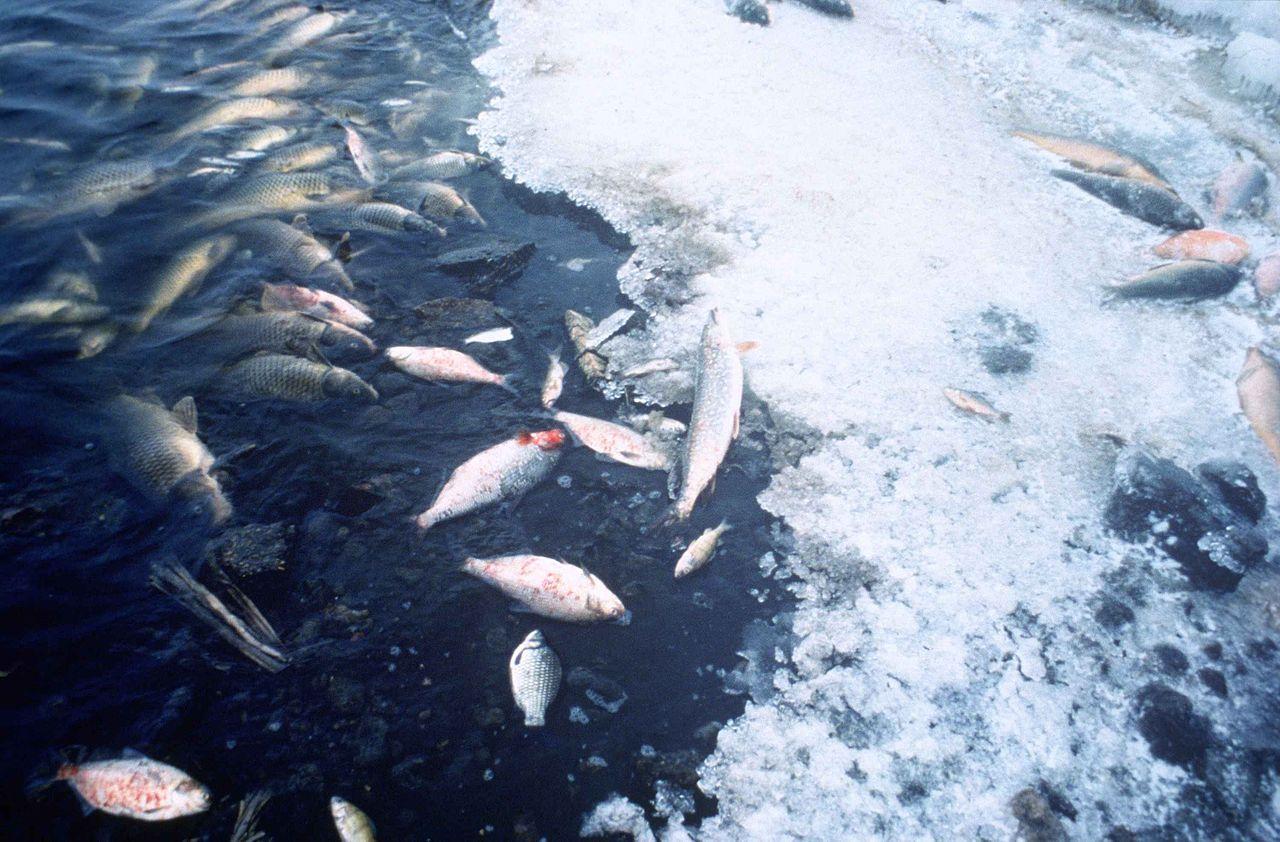 1280px-Fish_kill_pollution